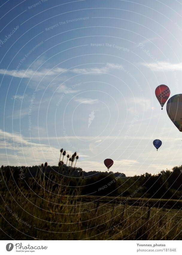 Unterwegs mit Freunden ruhig Ausflug Freiheit Sommer Veranstaltung Luft Himmel Wolken Ballone frei hoch Stimmung Leichtigkeit Ereignisse Schweben