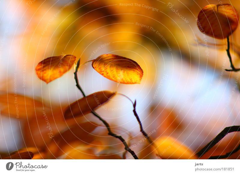 pur Natur Baum Pflanze Farbe Blatt Erholung Umwelt Herbst Holz Park Klima natürlich elegant authentisch Idylle Schönes Wetter