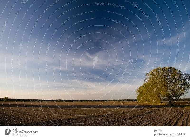 ackerbau Baum blau Wolken Ferne Erholung Herbst Landschaft Linie Zufriedenheit Stimmung braun Feld Hintergrundbild Horizont natürlich Schönes Wetter
