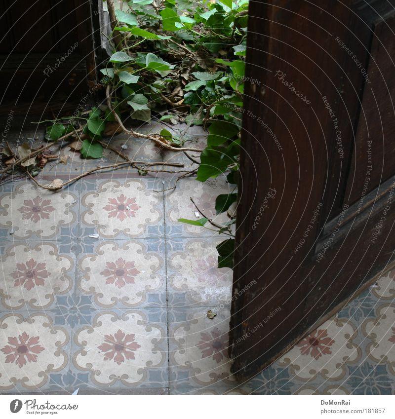 Hausfriedensbruch Natur grün Pflanze Blatt Holz Tür Wachstum retro offen Kultur Häusliches Leben natürlich Fliesen u. Kacheln Tor Eingang Gesellschaft (Soziologie)