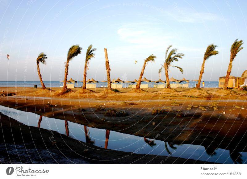 wind von links Ferien & Urlaub & Reisen Sommer Sommerurlaub Sonne Strand Meer Kiting Landschaft Himmel Horizont Schönes Wetter Wind palme Küste Erholung blau