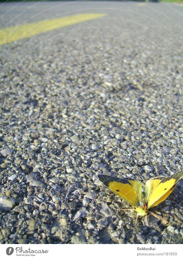 Verkehrsunfall Umwelt Natur Tier Straße Schmetterling 1 fliegen dehydrieren gelb grau Tod Einsamkeit Erschöpfung Verzweiflung Fortschritt Kultur stagnierend