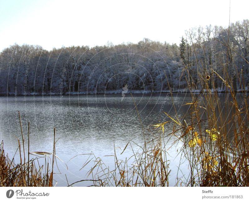 on the sunny side Natur Pflanze Landschaft Winter Wald kalt grau See Eis Wetter Klima Sträucher Wandel & Veränderung Frost Seeufer Jahreszeiten