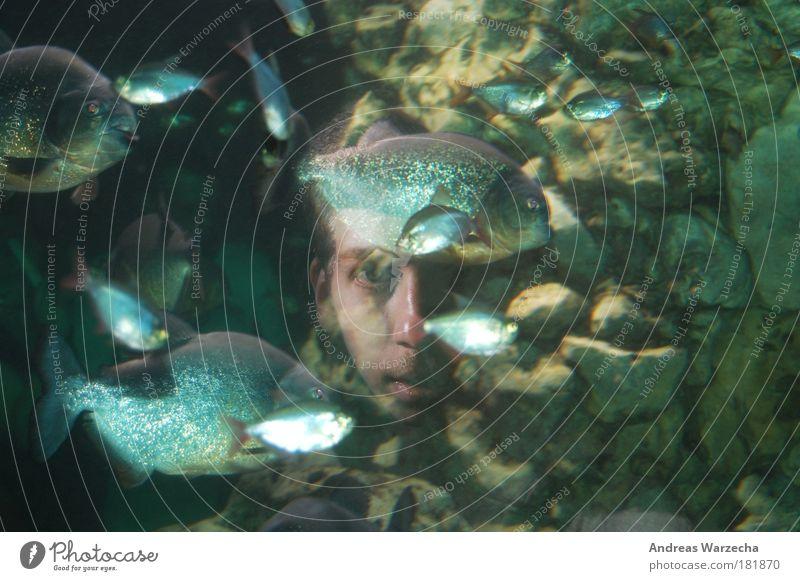 Aquarium Face Freiheit Meer Mensch maskulin Junger Mann Jugendliche Gesicht 1 18-30 Jahre Erwachsene Umwelt Natur Wasser Tier Fisch Zoo Tiergruppe Schwarm Stein