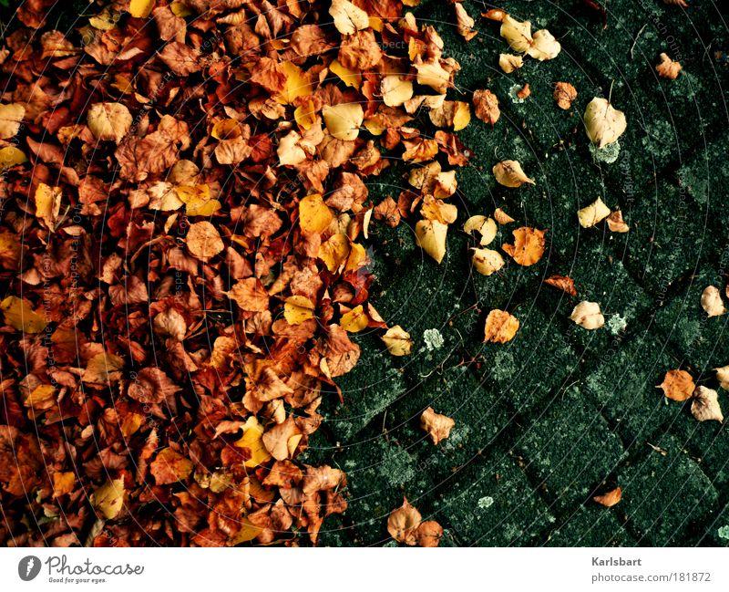 das trocknen der blätter während des vorgangs des herbstes. Natur alt Blatt Herbst Bewegung Stein Traurigkeit Wege & Pfade Linie Design Umwelt Lifestyle Platz Boden Wandel & Veränderung