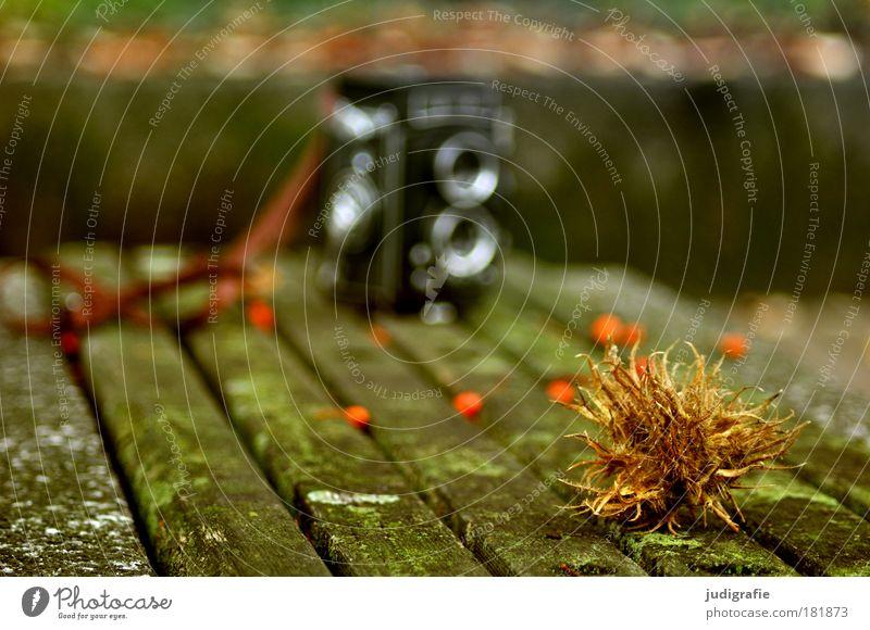 Herbst Farbfoto Außenaufnahme Tag Unschärfe Schwache Tiefenschärfe Natur Park stachelig Beeren Vogelbeeren Bank Holz Fotokamera zweiäugig Fotografieren