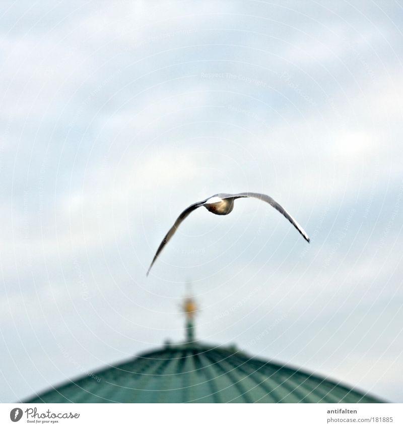 Nächster Halt: Tonhalle Himmel blau grün Wolken Tier Freiheit grau Bewegung träumen Luft Deutschland Vogel fliegen ästhetisch Zukunft Flügel