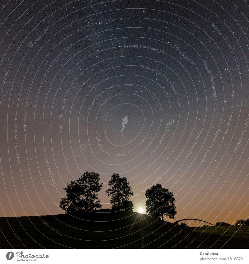 Mitternacht Natur Landschaft Pflanze Wolkenloser Himmel Nachthimmel Stern Mond Vollmond Sommer Baum Hügel Brückenkonstruktion glänzend ästhetisch gold violett