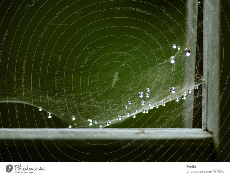 Zarte Bande Natur Wasser alt grün ruhig dunkel Holz Traurigkeit Stimmung glänzend Umwelt Wassertropfen ästhetisch Netzwerk Ecke Tropfen