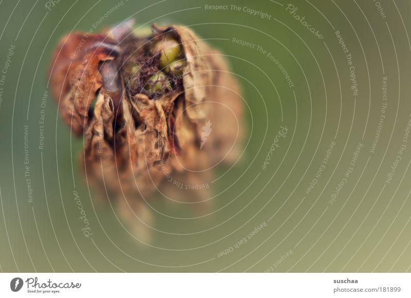 wiederbelebung? .. Farbfoto Gedeckte Farben Nahaufnahme Detailaufnahme Makroaufnahme Textfreiraum rechts Hintergrund neutral Unschärfe Schwache Tiefenschärfe