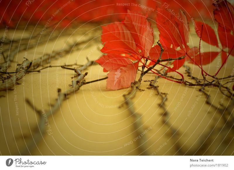 Herbstliebe Natur rot Pflanze Blatt Herbst Umwelt Landschaft Wege & Pfade Glück Garten Stimmung Park ästhetisch Fröhlichkeit Wachstum verrückt