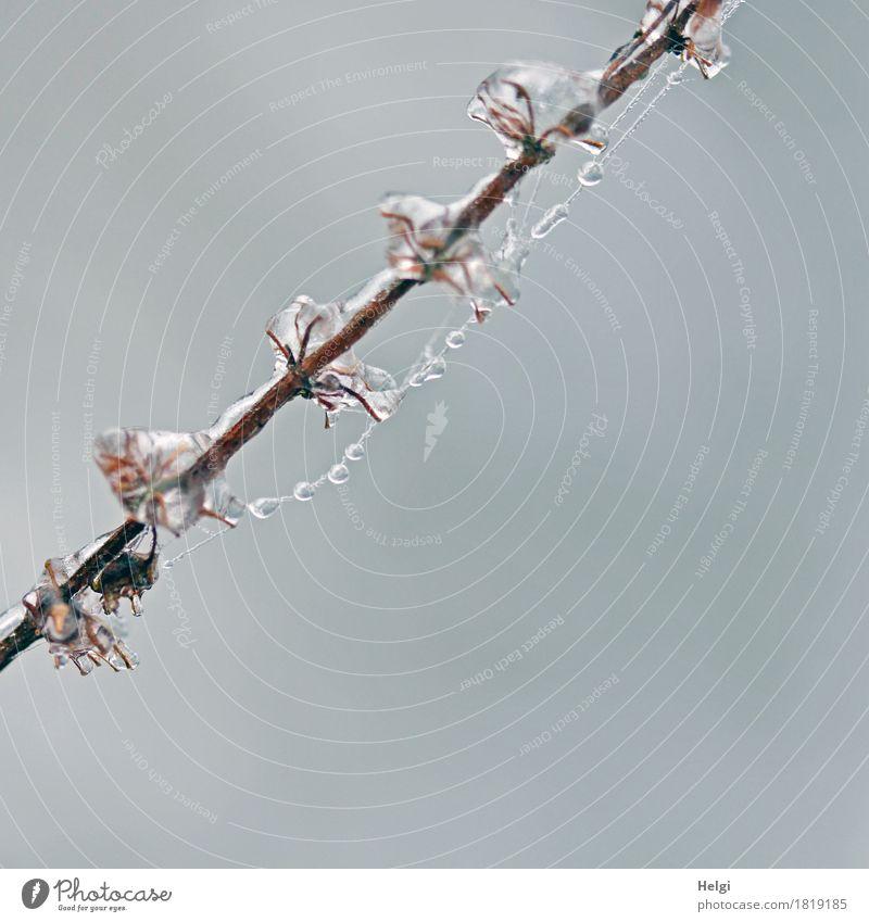 Eisperlen Natur Pflanze weiß Winter Umwelt kalt natürlich klein außergewöhnlich grau braun Feld ästhetisch einzigartig Vergänglichkeit