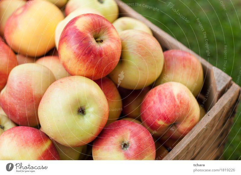 Äpfel Frucht Apfel Sommer Garten Herbst Gras Holz alt frisch natürlich saftig gelb rot Kiste Kasten reif Lebensmittel Gesundheit organisch Kisten produzieren