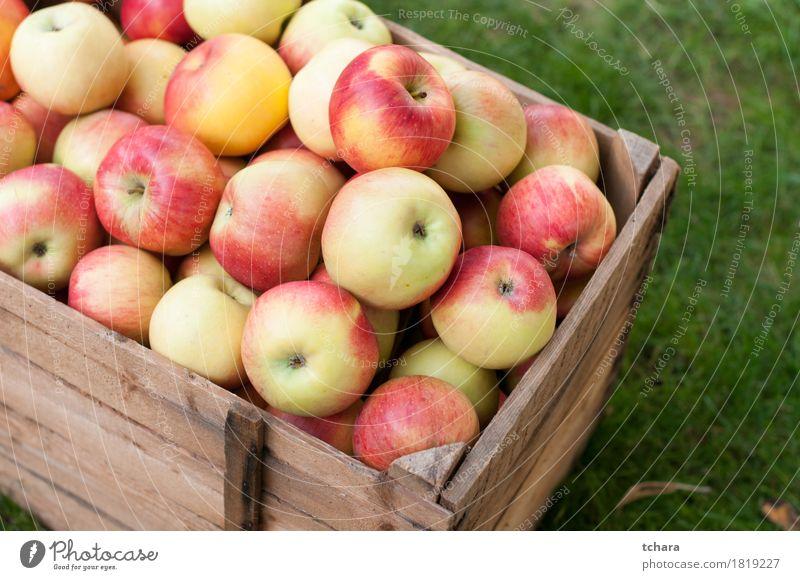 Äpfel Apfel Diät Sommer Garten Herbst Gras Holz alt frisch natürlich braun gelb grün rot Kiste Kasten reif Lebensmittel Gesundheit organisch Kisten produzieren