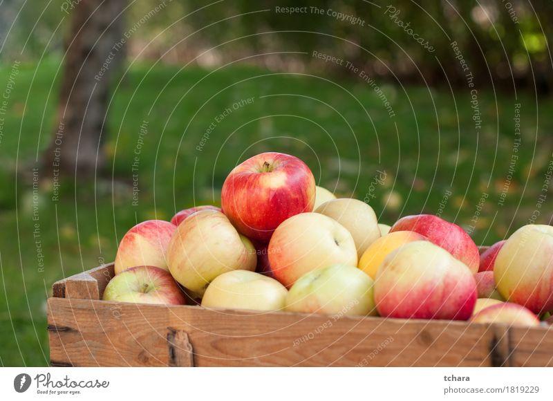 Äpfel Apfel Diät Sommer Garten Herbst Gras Holz alt frisch natürlich braun gelb grün rot Kiste reif Lebensmittel Gesundheit organisch Kisten produzieren