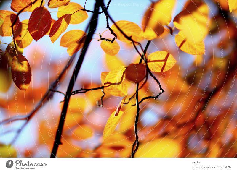 herbstlicht Farbfoto mehrfarbig Außenaufnahme Menschenleer Tag Licht Schatten Kontrast Reflexion & Spiegelung Sonnenlicht Schwache Tiefenschärfe