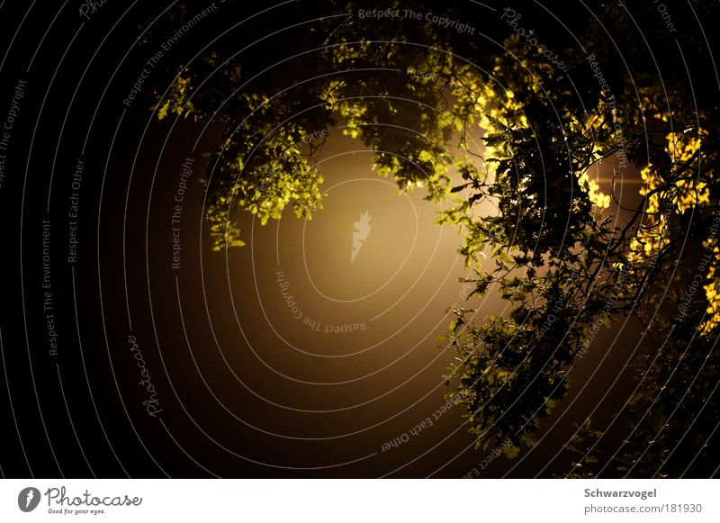 Mitternachtssonne Natur Baum grün Pflanze schwarz Einsamkeit Lampe dunkel Traurigkeit Zufriedenheit Stimmung Umwelt Energie hoch modern Wachstum