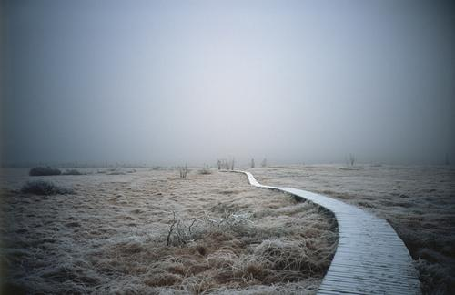 Weg ins Ungewisse Natur Landschaft Ferne Winter Umwelt kalt Gras gehen Nebel wandern trist Sträucher leer Zukunft Fußweg Hoffnung