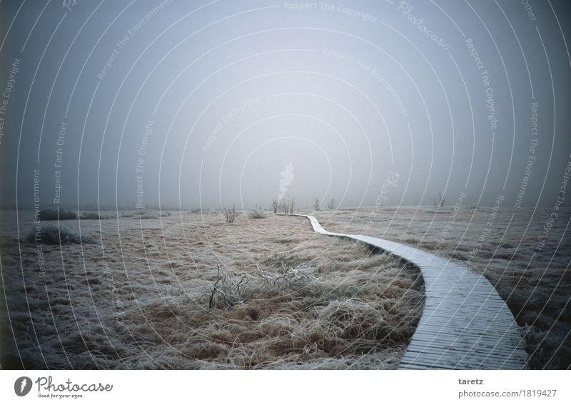 Weg ins Ungewisse wandern Umwelt Natur Landschaft Winter Nebel Gras Sträucher gehen gruselig kalt Hoffnung Sehnsucht Fernweh Ziel Zukunft ungewiss Hohes Venn