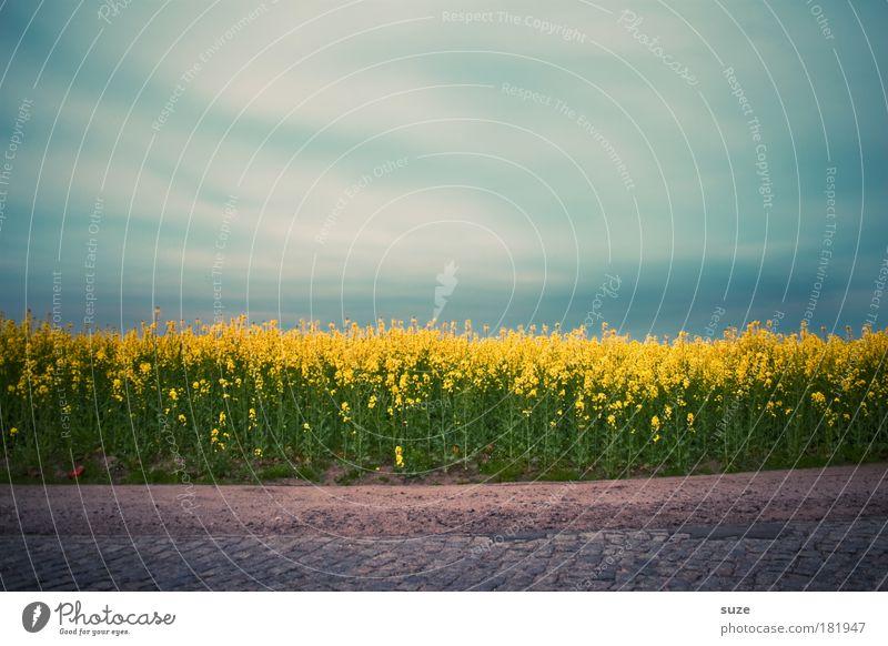 Rapsfeld Farbfoto mehrfarbig Außenaufnahme Menschenleer Textfreiraum oben Tag Lebensmittel Öl Ernährung Bioprodukte Energiewirtschaft Umwelt Natur Landschaft