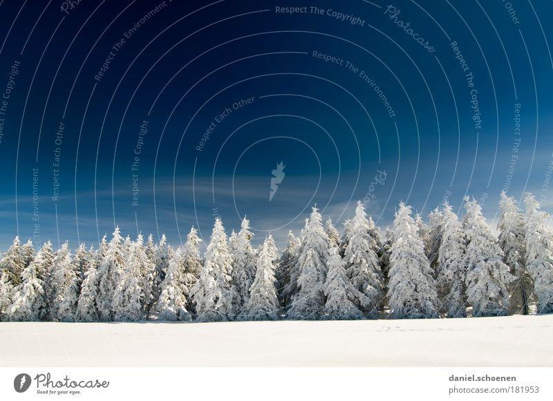 Schneefallgrenze 400 Meter Textfreiraum oben Textfreiraum Mitte Sonnenlicht Weitwinkel Himmel Wolkenloser Himmel Winter Schönes Wetter Eis Frost Baum Wald kalt