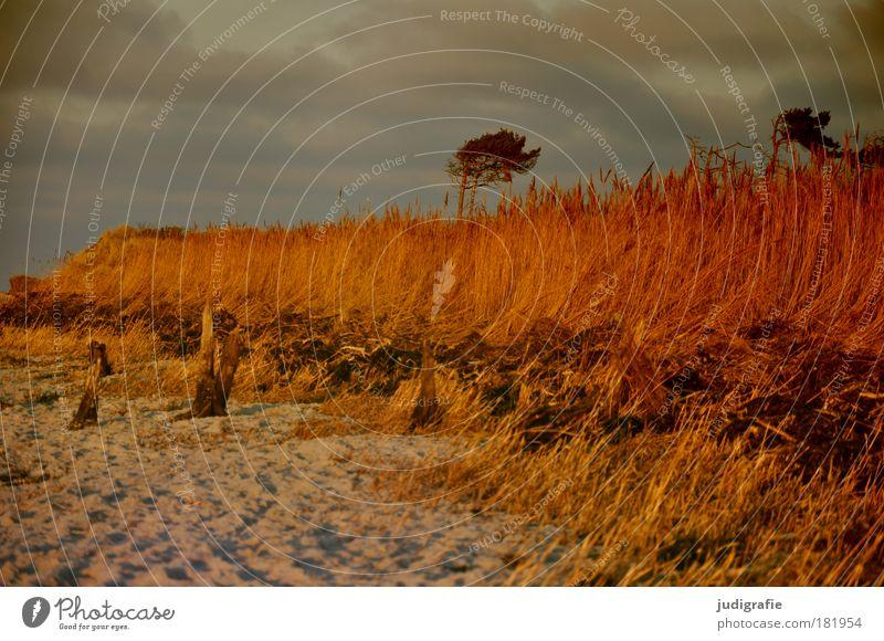 Weststrand Natur Himmel Baum Pflanze Strand Ferien & Urlaub & Reisen Wolken Erholung Gras Wärme Sand Landschaft Stimmung Küste Umwelt Meer