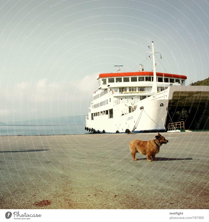 meine kleine welt Natur Sommer Ferien & Urlaub & Reisen Meer Ferne Wasserfahrzeug Tier Landschaft Umwelt Hund warten Ausflug Tourismus Hafen Europa Haustier