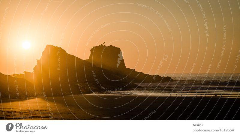 Golden Natur Ferien & Urlaub & Reisen schön Wasser Sonne Meer Erholung Strand Beleuchtung Sand Wellen gold Sehnsucht Spuren Abenddämmerung Abendsonne