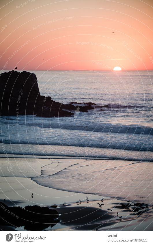 Am Meer IV Himmel Natur Ferien & Urlaub & Reisen Wasser Sonne rot Erholung Strand Beleuchtung Vogel Sand Felsen Horizont Wellen Sehnsucht