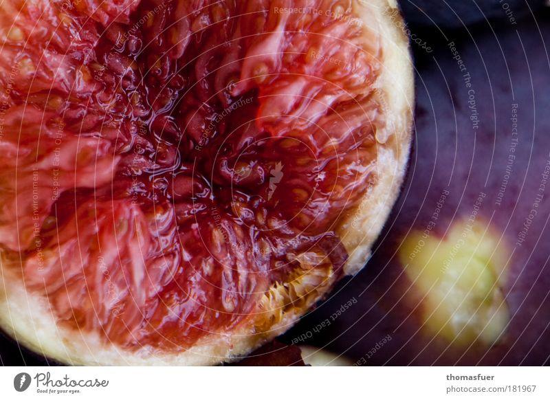 süß wie die Sünde Farbfoto Außenaufnahme Nahaufnahme Menschenleer Textfreiraum rechts Tag Schwache Tiefenschärfe Vogelperspektive Lebensmittel Frucht Feige
