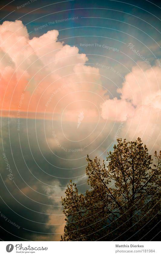 Baum orange Dekoration & Verzierung Aussicht Gardine Umweltverschmutzung alternativ Leuchtspur Reflektor Saurer Regen