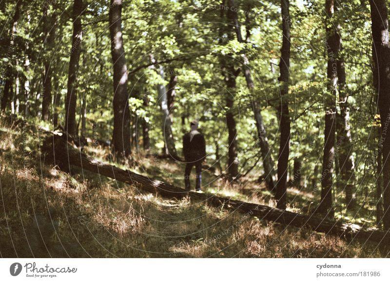 Zeit Mensch Natur Mann schön Baum Landschaft ruhig Wald Erwachsene Umwelt Leben Traurigkeit Wege & Pfade Zeit Freiheit träumen