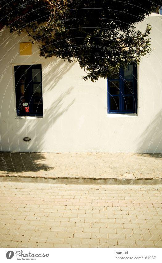 Donald Duck Wand Fenster Baum Straße Bordsteinkante Schatten Fassade Blick Ente