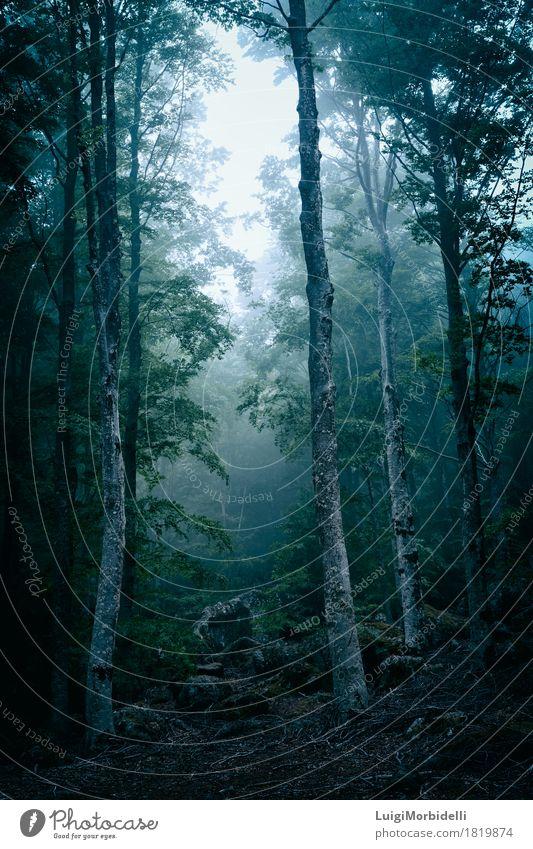 Dunkler Wald mit Nebel Halloween Natur Landschaft Pflanze Herbst Wind Baum Park dunkel wild Angst Farbe Surrealismus Kofferraum Oktober Mysterium Wildnis
