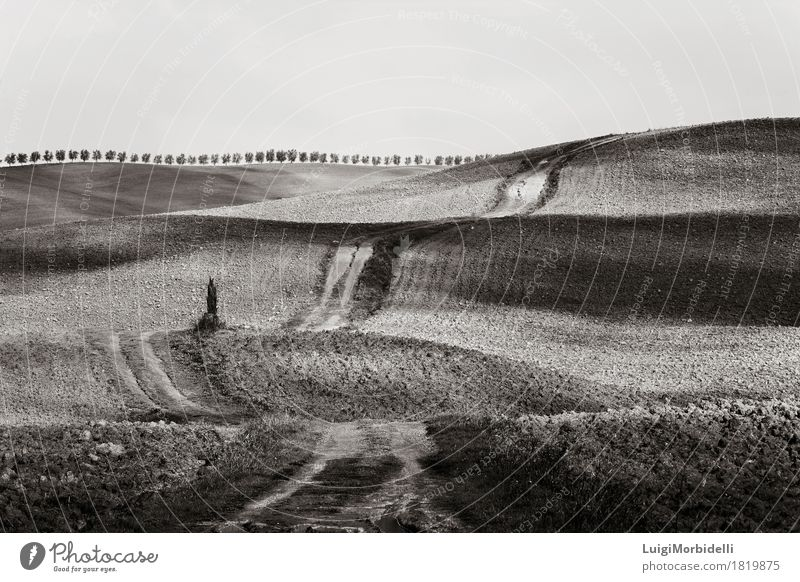 Hügel von Val d'Orcia, Toskana Natur Landschaft Himmel Herbst Schönes Wetter Pflanze Baum Feld Straße schön natürlich Panorama Pienza ländlich val Siena Europa
