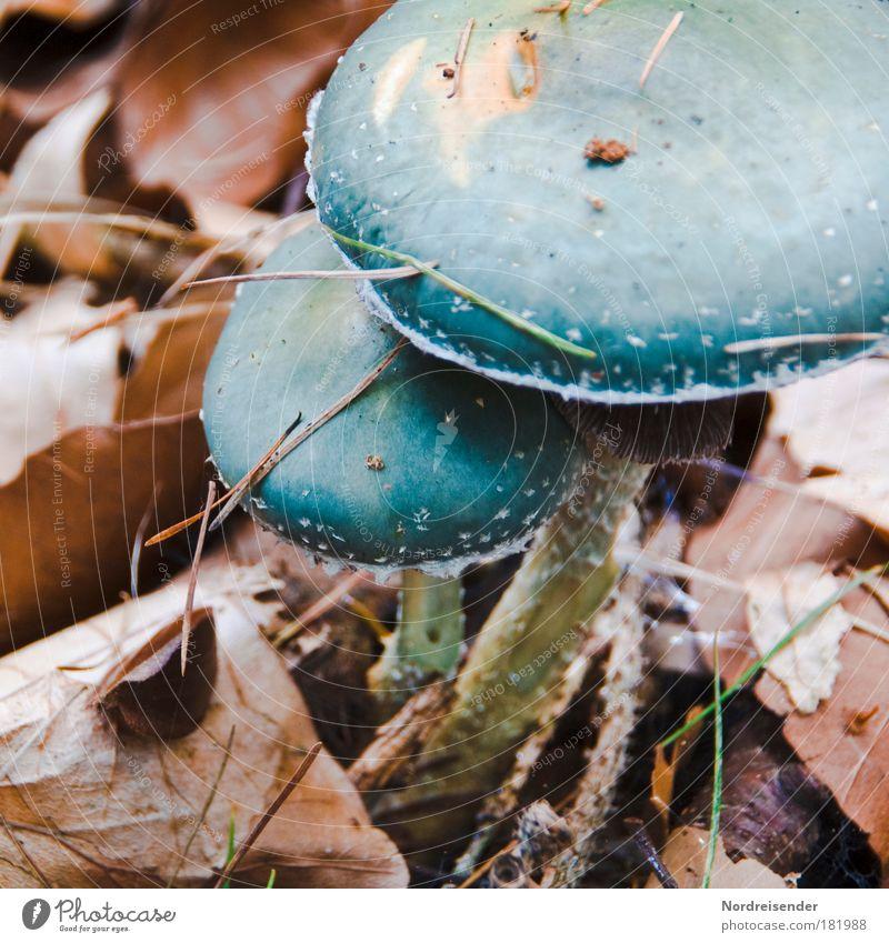 Zweisamkeit Natur grün Pflanze Blatt ruhig Erholung Umwelt Herbst Erde Angst außergewöhnlich natürlich gefährlich ästhetisch Sicherheit beobachten