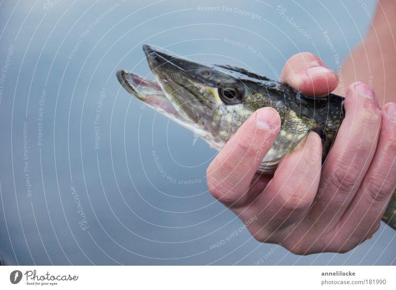 catch & release Wasser Hand Sommer Ferien & Urlaub & Reisen Tier kalt Ernährung Freiheit Küste See Arme Haut nass Freizeit & Hobby Tourismus Fisch