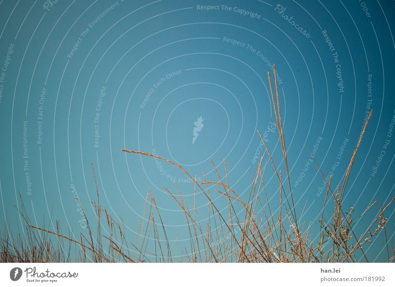 Halme Himmel Natur blau Pflanze Sonne Meer Sommer Strand Landschaft Gras Energie Halm Dürre