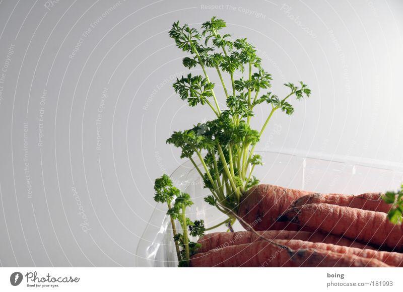 Kühlschrankschattengewächs Pflanze Ernährung Leben Wohnung Lebensmittel Wachstum Kochen & Garen & Backen Küche Häusliches Leben Vergänglichkeit Gastronomie Lebensfreude Gemüse Mut Gartenarbeit Möhre
