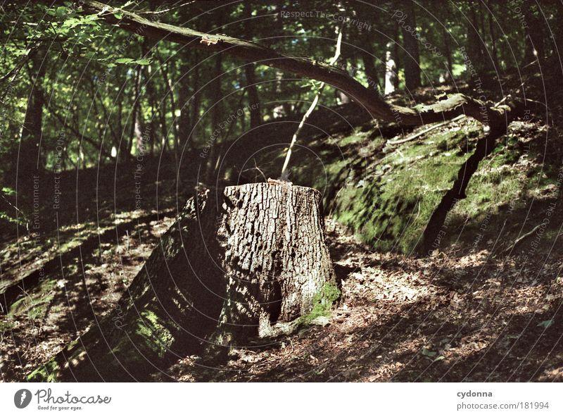 Wildwuchs Natur schön Baum Pflanze ruhig Wald Leben Tod Freiheit träumen Traurigkeit Umwelt Zeit Perspektive Wachstum Zukunft