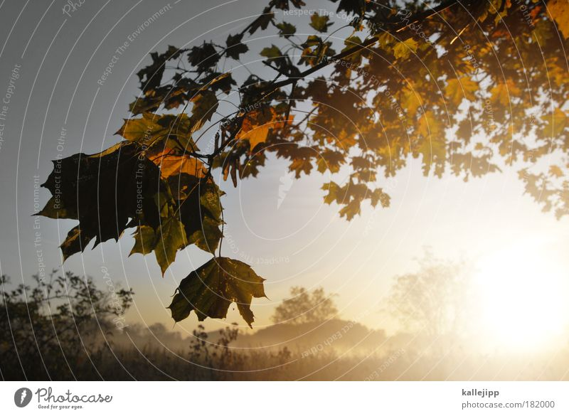 air canada Natur Baum Sonne Pflanze Ferien & Urlaub & Reisen Blatt Ferne Wald Erholung Wiese Herbst Freiheit Landschaft Umwelt Wetter Feld