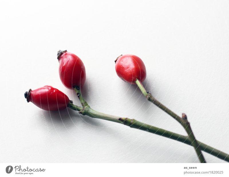 Hagebuttengrafik Wellness Leben harmonisch ruhig Garten Dekoration & Verzierung Erntedankfest Natur Herbst Pflanze Sträucher Beeren Zweige u. Äste Blumenstrauß