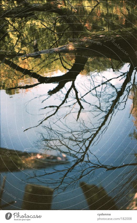 Den Himmel berühren Himmel Natur Wasser schön Baum ruhig Wald Leben Umwelt Freiheit Wege & Pfade träumen ästhetisch Perspektive Wandel & Veränderung einzigartig