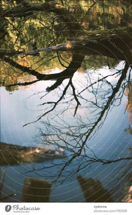 Den Himmel berühren Natur Wasser schön Baum ruhig Wald Leben Umwelt Freiheit Wege & Pfade träumen ästhetisch Perspektive Wandel & Veränderung einzigartig