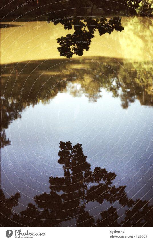 Unten kann auch oben sein Himmel Natur Wasser schön Baum ruhig Wald Leben Umwelt Landschaft Freiheit Wege & Pfade träumen Horizont einzigartig Vergänglichkeit