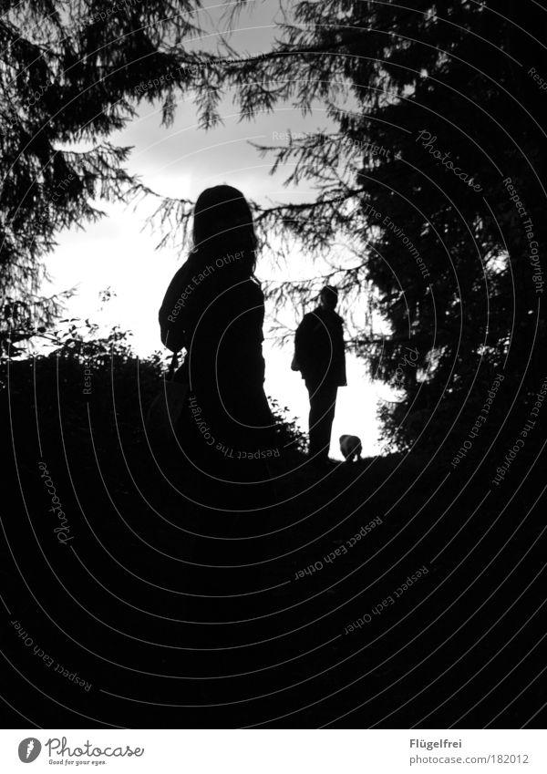 Im Schatten des Waldes Hund Mensch Mann Pflanze Baum Einsamkeit schwarz Erwachsene dunkel Herbst Familie & Verwandtschaft gehen maskulin Angst fantastisch