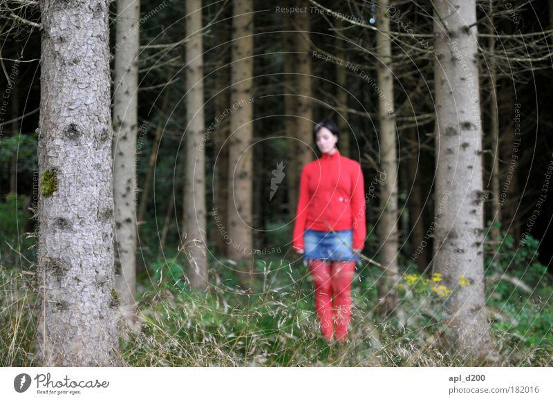 Rotkäppchen Mensch Natur Jugendliche grün Baum Pflanze rot Sommer Erwachsene Einsamkeit Wald feminin dunkel Umwelt Landschaft Frau