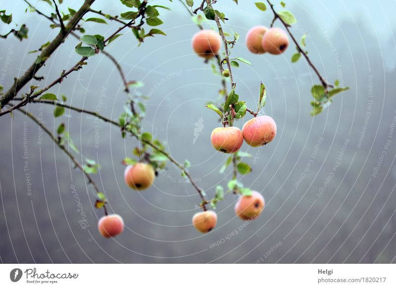 Restbestände... Natur Pflanze grün Baum rot Blatt Umwelt kalt gelb Leben Herbst natürlich Lebensmittel grau braun Stimmung