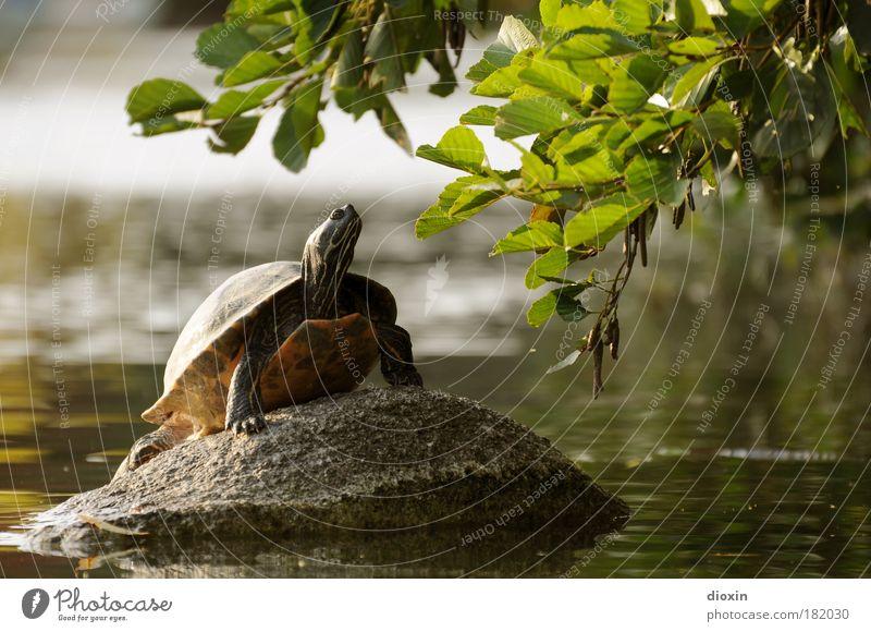 Chilled Kröte Natur Pflanze Wasser Erholung Blatt ruhig Tier Umwelt See Felsen Park Zufriedenheit Wildtier Warmherzigkeit Gelassenheit Wohlgefühl