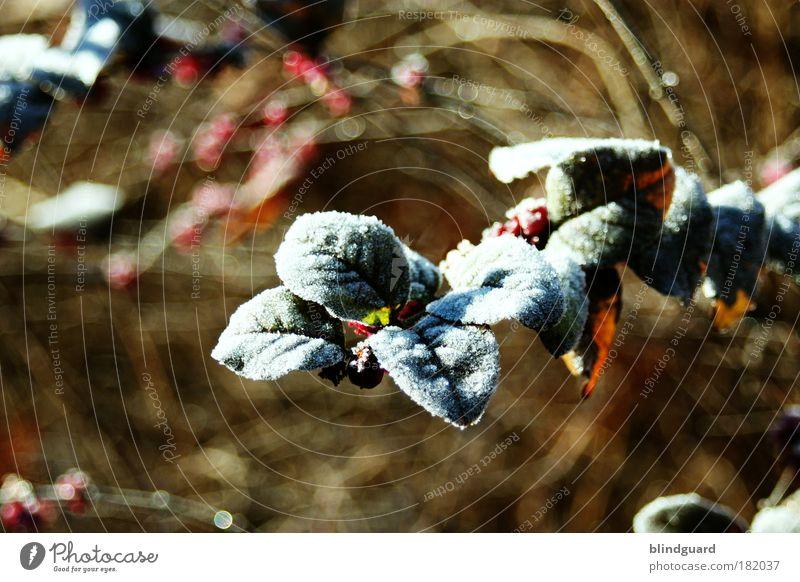 Stone Cold Farbfoto Außenaufnahme Menschenleer Textfreiraum links Textfreiraum oben Textfreiraum unten Tag Schwache Tiefenschärfe Natur Pflanze Winter Sträucher